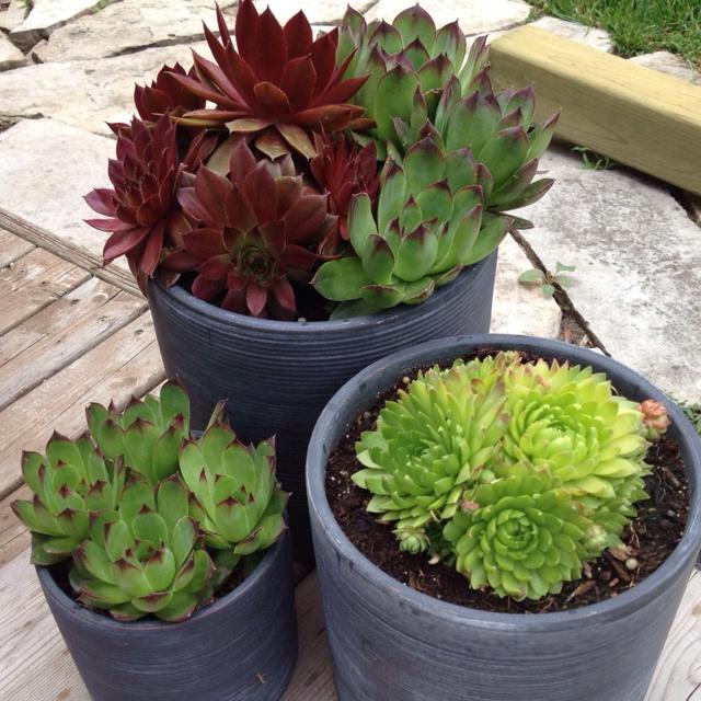 My succulent pots!