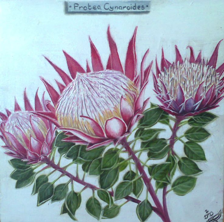 The Protea - by Dawn Du Preez  Oil on Canvas  Available on http://sherrynssecret.com/index.php?route=product/category&path=126