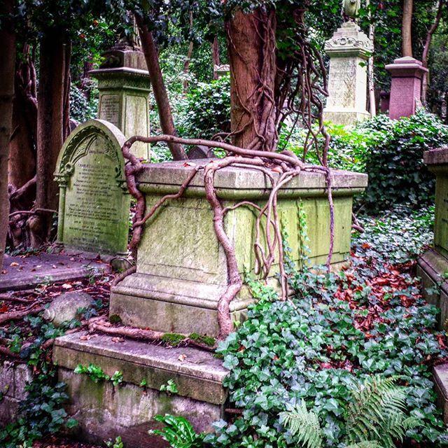 Natur vs. Menschenhand. Wobei dieser Kampf insbesondere auf einem Friedhof als entschieden gelten dürfte... Nature is always winning.  #London #cemeteries #graveyards #graveyard #cemetery #HighgateCemetery #Highgate #Friedhöfe #Friedhof #MagnificentSevenCemeteries #magnificentseven #mementomori #N6