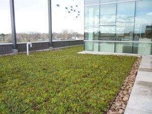 green-roof-liveroof