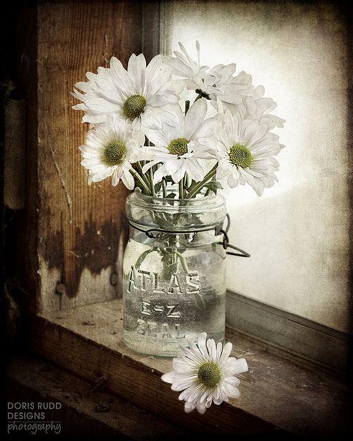 <3  Daisies on the windowsill