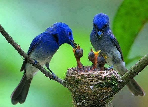 Natures family meal time