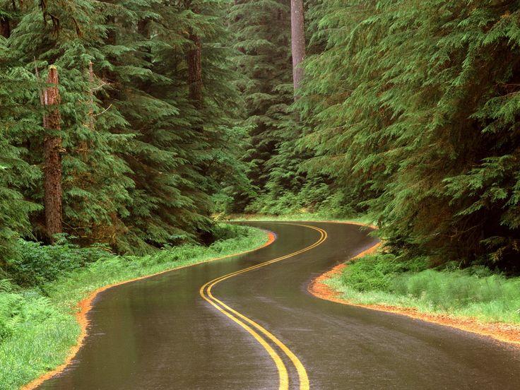 Driving through Olympic National Park, Washington