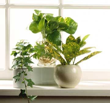 For best results, use opaque jars when growing plants in water.