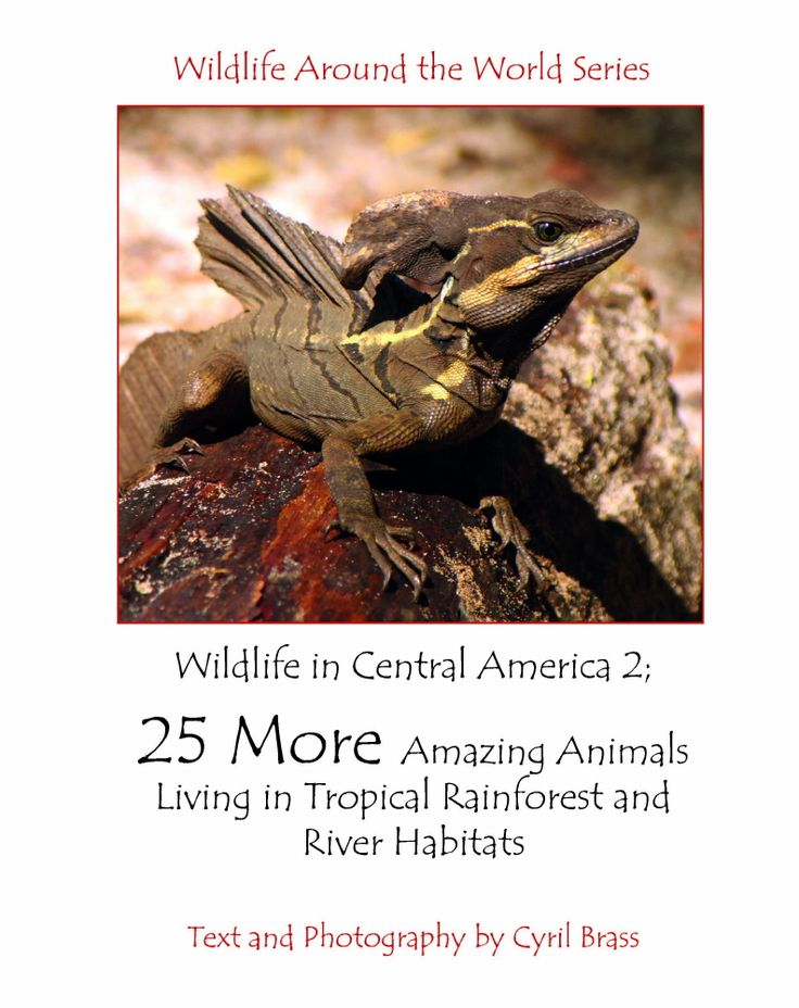 Wildlife in Central America 2; 25 MORE Amazing Animals Living in Tropical Rainforest and River Habitats. Part of Wildlife Around the World Series.   Photographs and Text by Cyril Brass.   Sample - Front Page