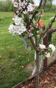 zart und fein.......Apfelblüten