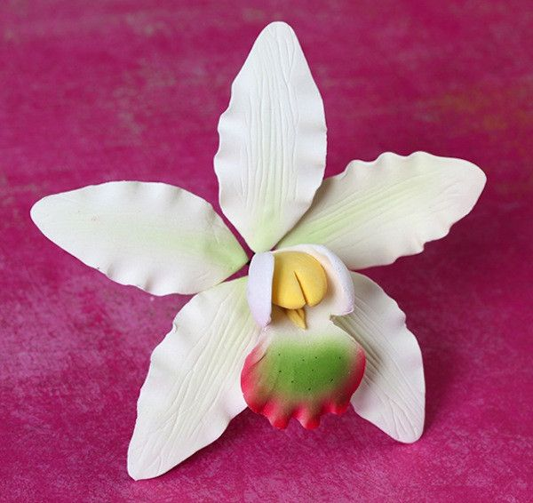 how to look after dendrobium orchid