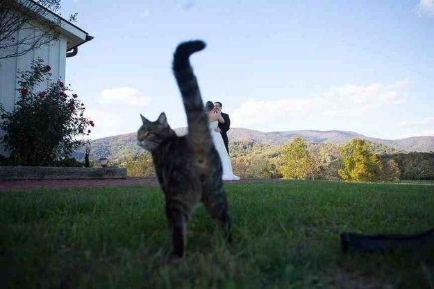 Photobomb animali gatto al matrimonio