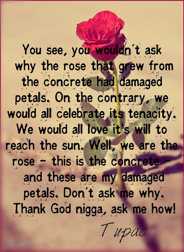 The Holdup - Smell These Roses Lyrics | Musixmatch