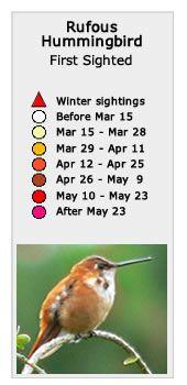 Rufous Hummingbird Migration Map, Spring 2017