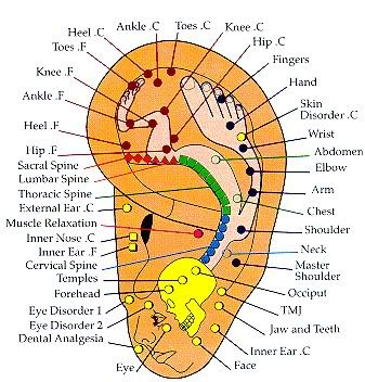 Acupressure/Acupuncture Ear Map