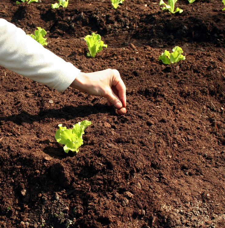 Get your soil ready for spring add lots and lots of organic matter try using compost - Organic gardening practical tips ...
