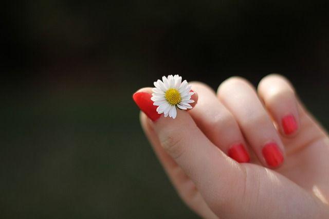 Main, Marguerite, Fleur, Doigt - Image gratuite sur Pixabay