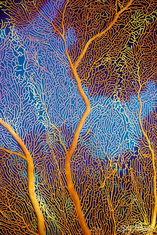 Gorgonian Sea Fan ~ as seen in our 2014 Nature Design slimline wall calendar. http://www.pascalpress.com.au/steve-parish-2014-vertical-calendar-nature-design/