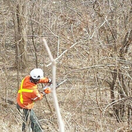 Tree Care Services: Lot Clearing for Developers, Property Management and Residential Free Estimates CALL 647545-8733