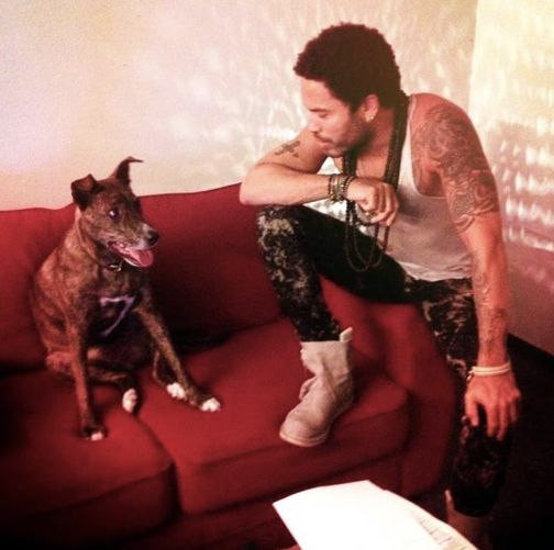 Photo of Lenny Kravitz & his  Dog