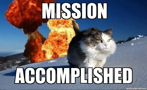 Mission accomplished cat