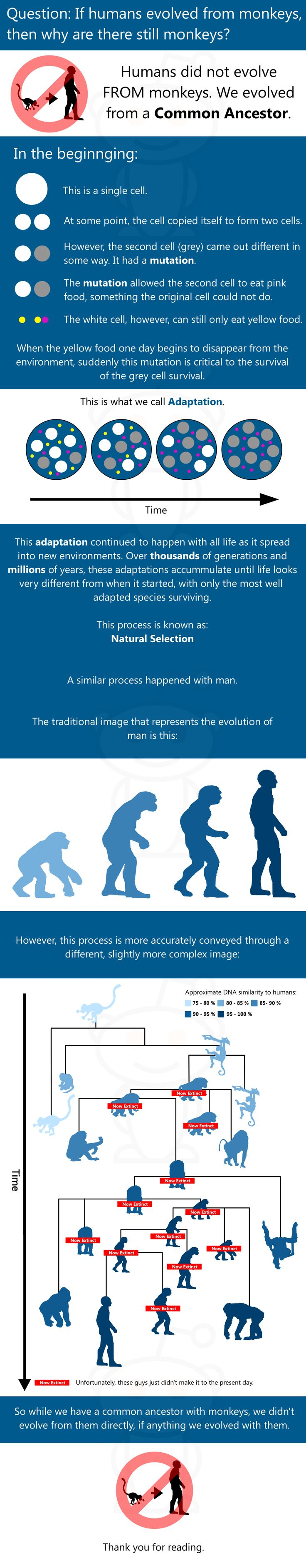 If humans evolved from monkeys, then why are there still monkeys ???