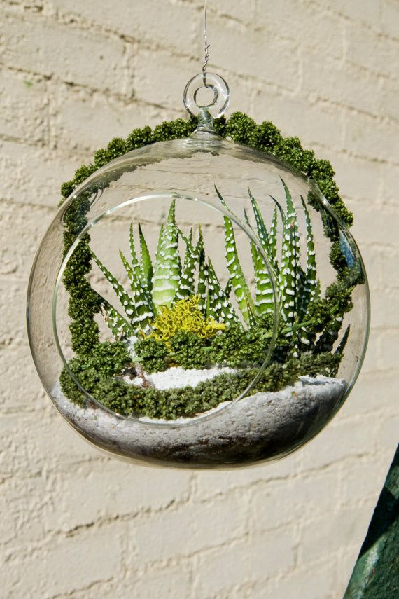 love this terrarium from http://www.etsy.com/listing/72917894/terrarium-easy-to-care-for-casa-helecho