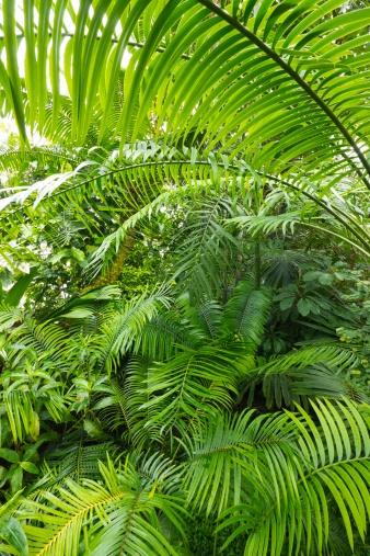 Amazon Rain Forest, Amazonia, Brazil