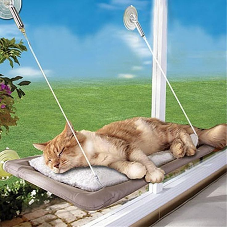 >>>>STAFF PICK<<<<< Your cat is going to love this window bed. Indoor cats especially will love taking in the view outside from high amongst the treetops and can spend hours gazing out at your garden