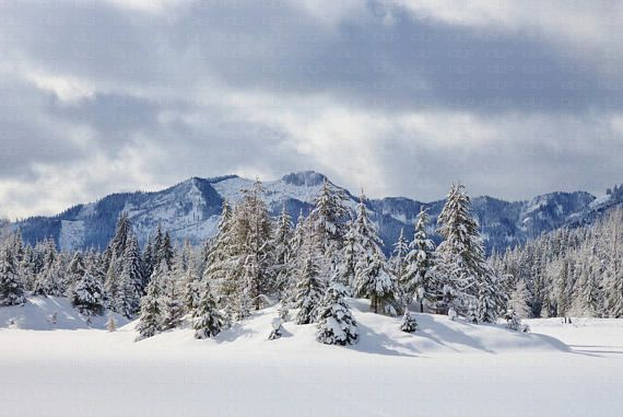 Winter Mountains Snow Covered Ground And Evergreen Trees Snowy Etsy Evergreen Trees Winter Mountain Northwest Landscaping