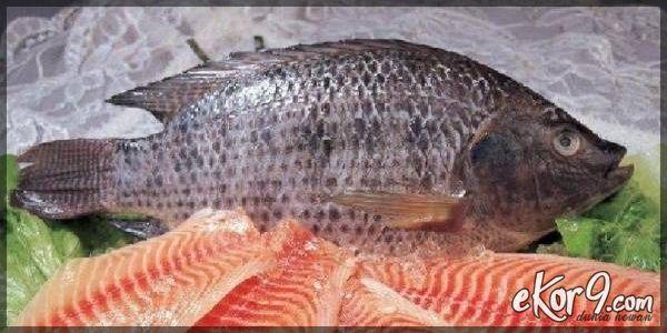 Ikan merupakan salah satu bahan makanan yang populer karena rasanya enak dan memiliki kandungan gizi yang baik. Namun, tahukah kamu kalau ternyata ada beberapa jenis ikan yang sebaiknya tidak kamu konsumsi?