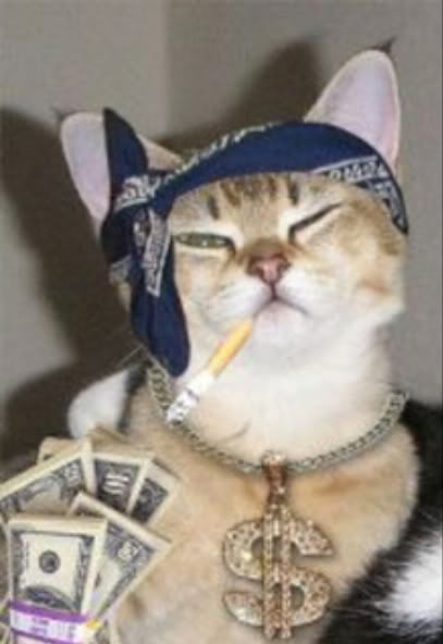 Gangsta Cat Kidz N Animalz Pinterest Cats Haha