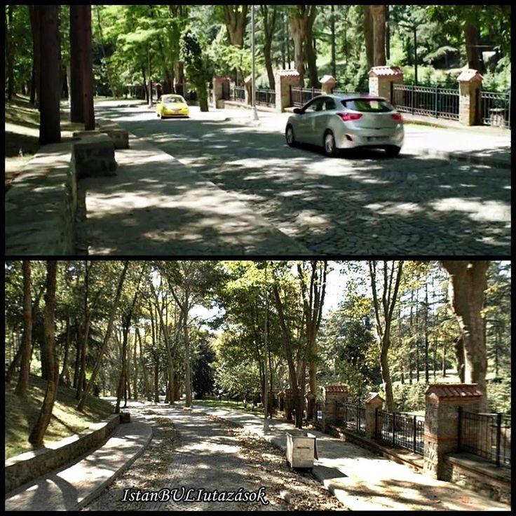 Beykozi erdő, Isztambul
