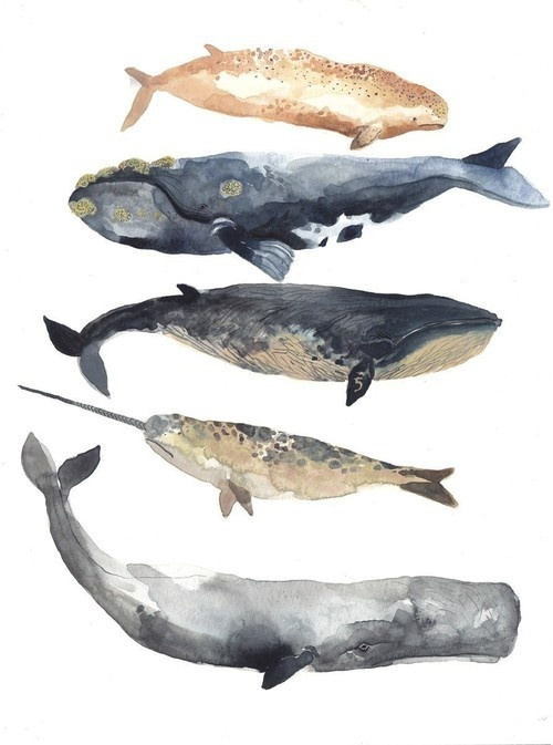 whales and water colors