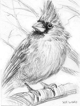 The Paintings of Jeff Ward: Cardinal Sketch ACEO