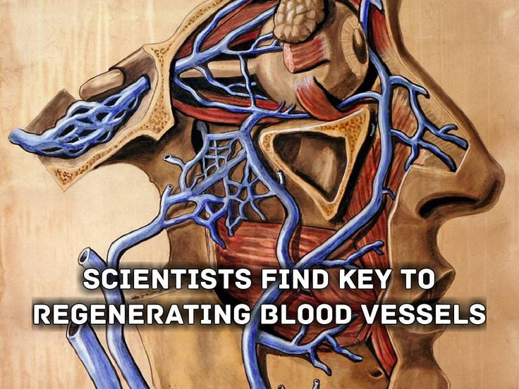 """#tech #technology #news #breakingnewshttps://goo.gl/H5y8ow -------------------------------------------------------------------------------- """"A new study led by researchers at Sanford Burnham Prebys Medical Discovery Institute (SBP) identifies a signaling pathway that is essential for angiogenesis the growth of new blood vessels from pre-existing vessels. The findings published inNature Communications may improve current strategies to improve blood flow in ischemic tissue such as that found…"""