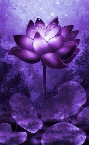 Purple ~~~