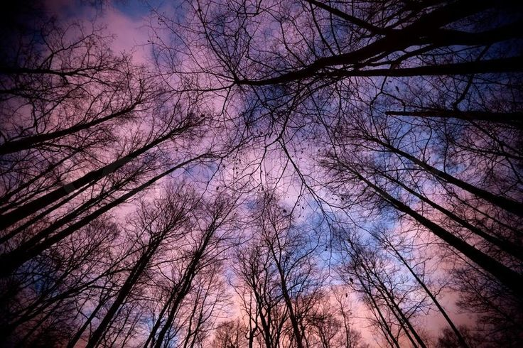 sky in the forest - Google Search