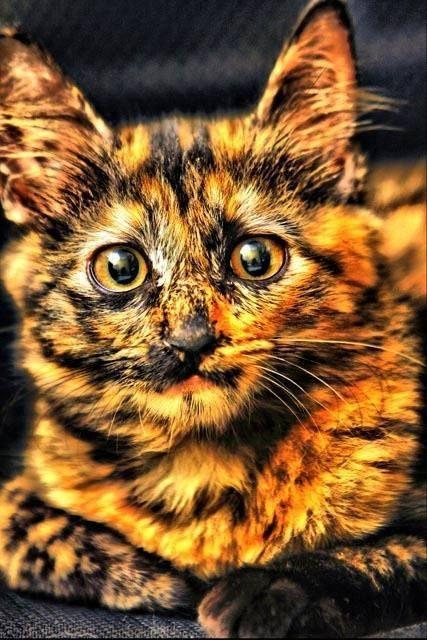 Amazing tortoishell cat