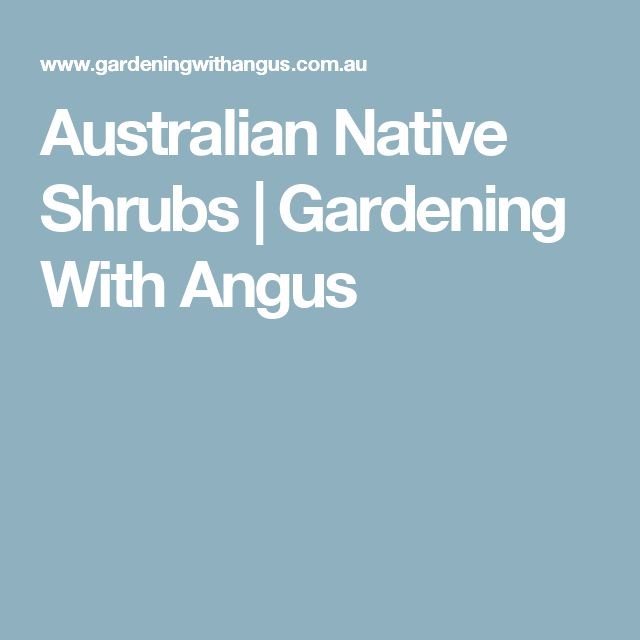 Australian Native Shrubs | Gardening With Angus
