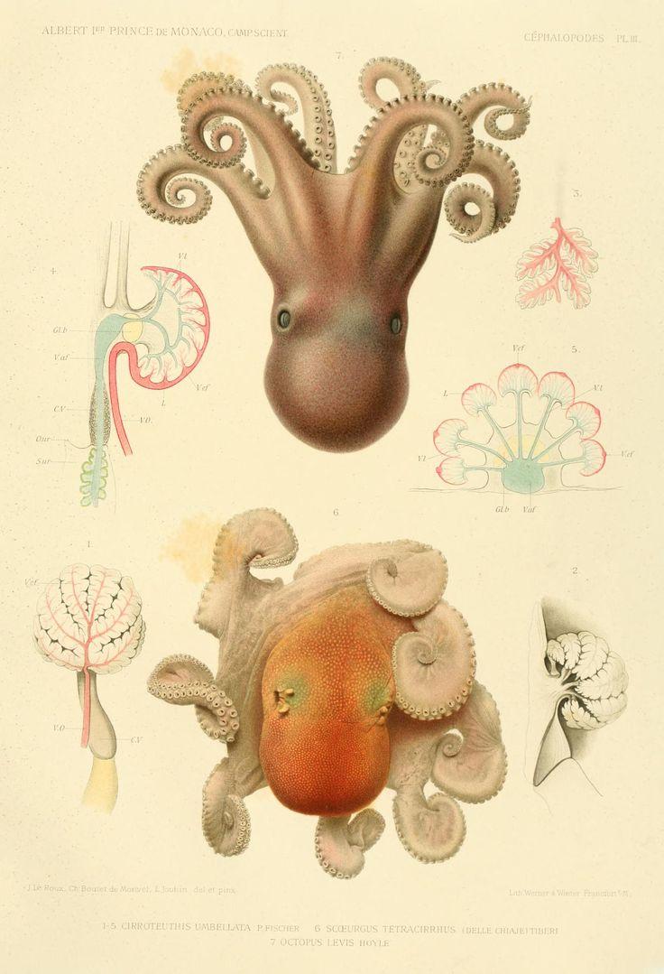 Felix murillo lleno de colores painting acrylic artwork fish art - F 17 C Phalopodes R Sultats Des Campagnes Scientifiques Accomplies Sur Son Yacht