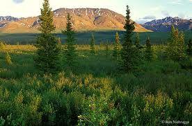 Taiga en verano. Taiga en invierno. En el hemisferio Norte las condiciones climáticas originan dos tipos básicos de paisaje natural