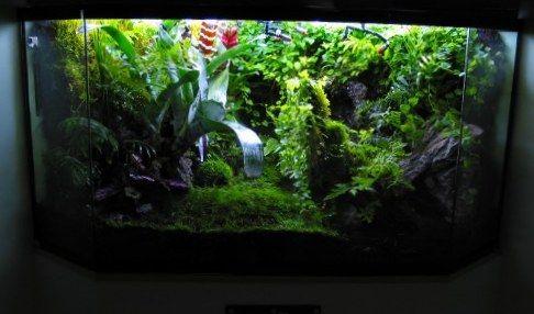 17+ best images about Aquariums and Terrariums on ... 10 Gallon Dart Frog Vivarium