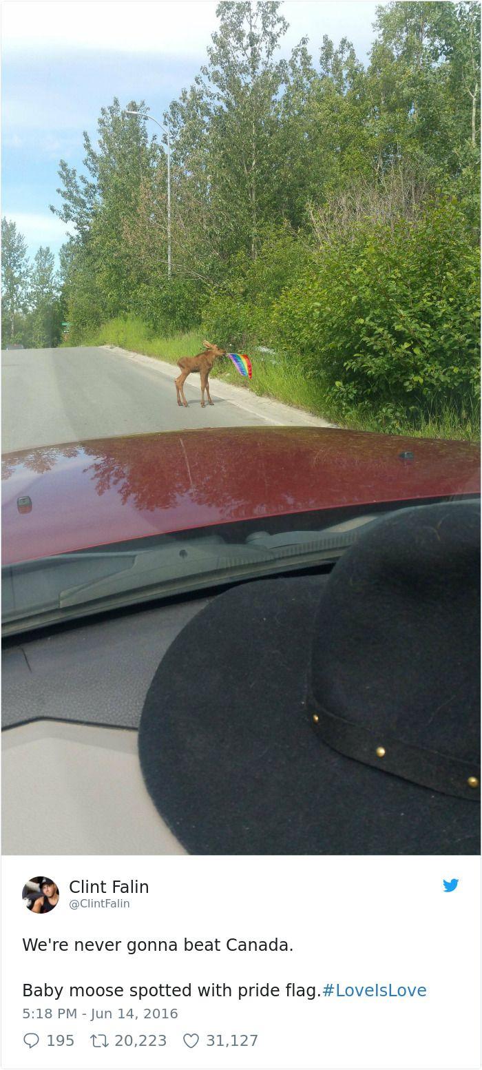 Funny Canada Jokes Memes Tumblr Canada Jokes Meanwhile In Canada Canada Photos