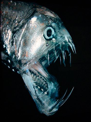 19 Creatures From The Mariana Trench fangtooth