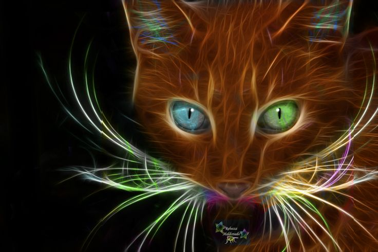 animal fractals | share