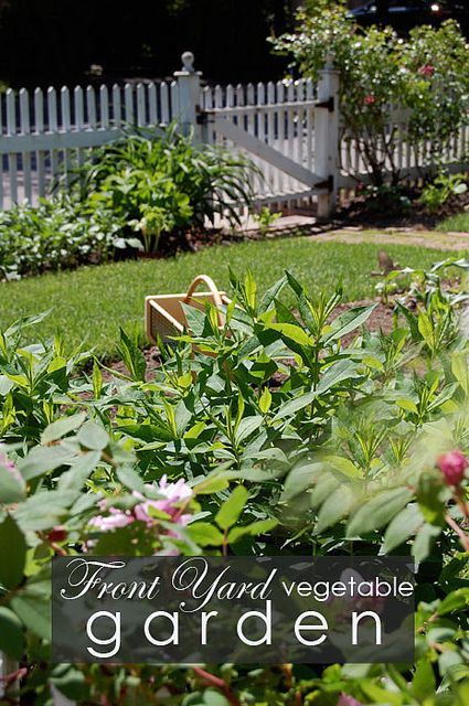 Top 58 ideas about front yard veggie gardens on Pinterest