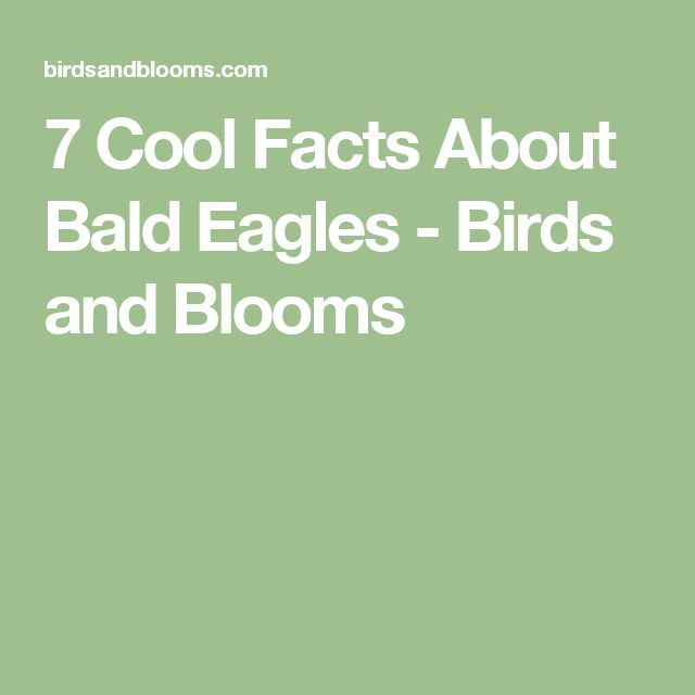 7 Cool Facts About Bald Eagles - Birds and Blooms