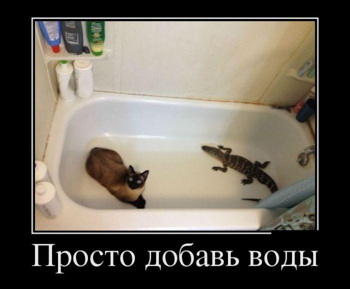 Самые забавные демотиваторы! / Приколы