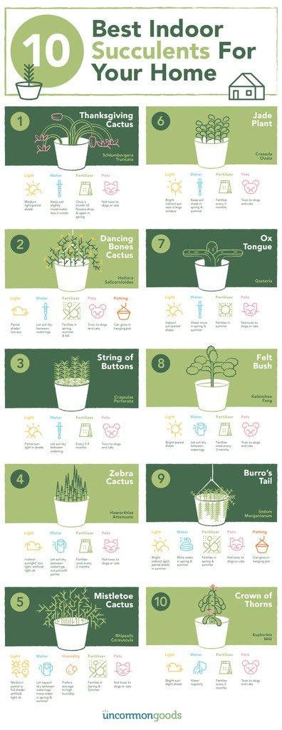 10 Best Indoor Succulents for your Home this Fall/Winter! Important succulent information on chemistrycachet.com