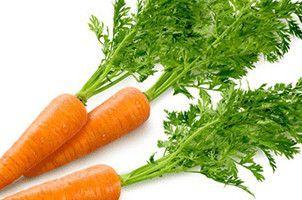 Carrot Flower Essence,Daucus carota