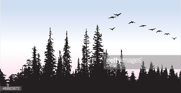 A vector silhouette illustration of a flock of geese flying over a pine forest.