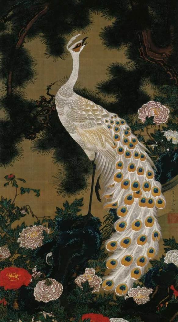 Albino cock.
