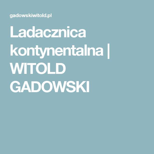 Ladacznica kontynentalna | WITOLD GADOWSKI